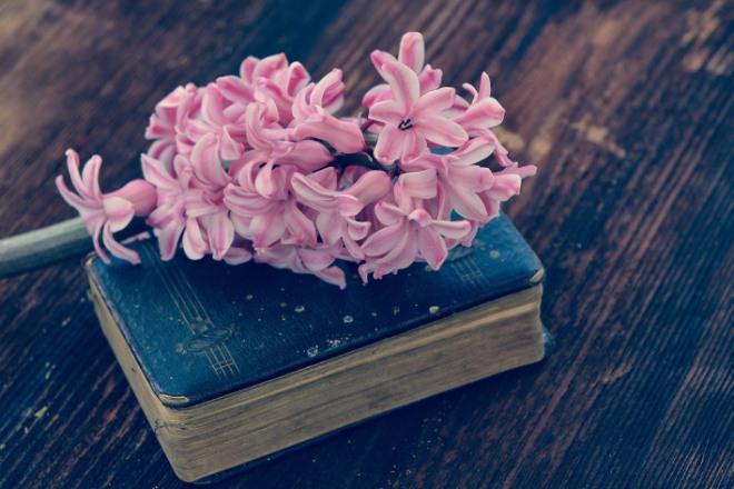 hyacinth-744060_1280